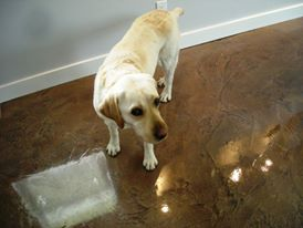 are concrete floors pet friendly ottawa